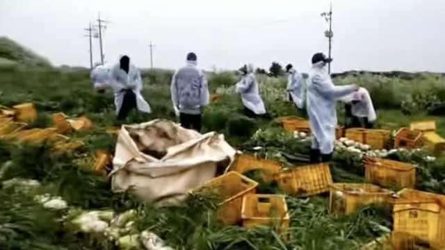 在他乡|中国工人回国出现用工荒,他留济州岛打工涨薪20%