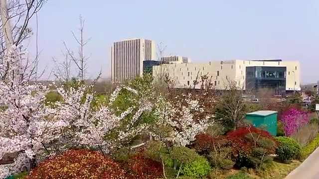 西海岸新区红石崖街道隔屏有花香,共赏人间最美四月天