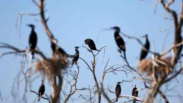 乌伦古湖看鸟