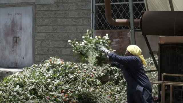 新冠导致全球鲜花市场受挫:工人流失,供应链中断,订单取消