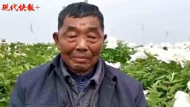 80岁老人用10年时间为亡妻种出一片花海