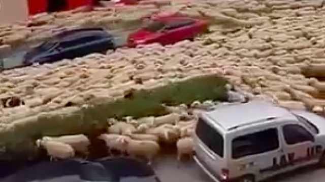 封城期间,土耳其街道被上千头羊占领,队伍浩荡