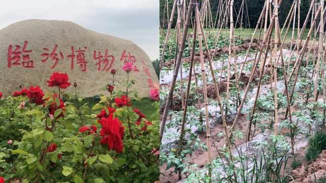 山西一博物馆草坪变菜园,回应:为了培育土壤,后期做绿化