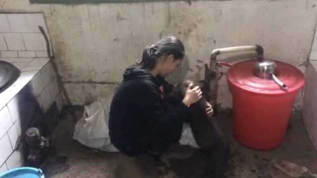 村民收留熊崽被送动物园,12岁女儿不舍落泪,民警:免费去看