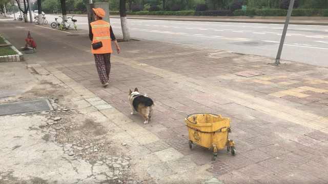 宠物狗帮环卫阿姨拖垃圾:不给拖就嗷嗷叫,每天要按摩