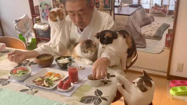 """骗人出家?日本""""猫王住持""""每日吸猫下饭走红"""