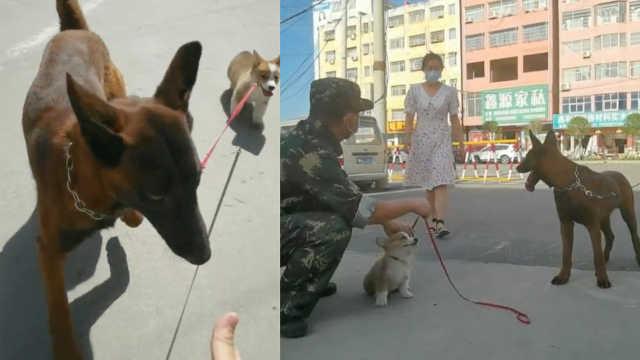 警犬出去玩叼回一只柯基,训导员:捡瓶子职业病犯了