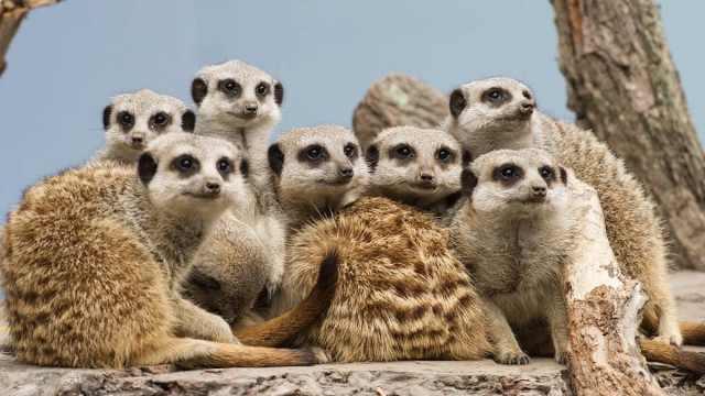 澳动物园遭山火包围后又遇疫情,动物今年没怎么见到游客
