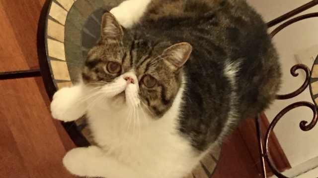 屋主怀疑保洁未关门致猫坠亡,家政公司:我们不负责看猫