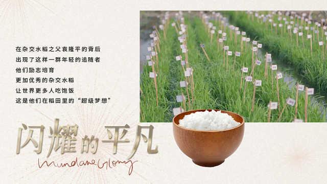 探寻一碗米饭背后的艰辛,看稻田梦想家如何解决世界粮食难题