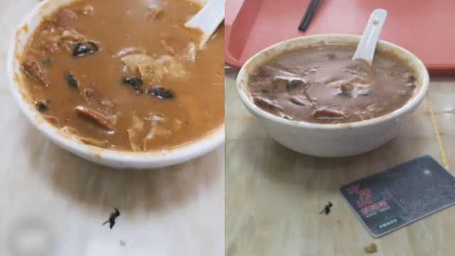 男子在方中山胡辣汤吃到苍蝇,老板双倍赔偿:苍蝇自己飞进碗
