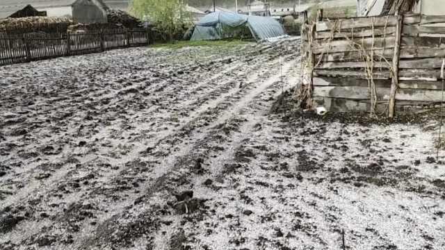 菜地变雪地!黑龙江突降冰雹又下雨,大片菜苗