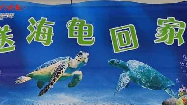 跨越1379km!红山动物园送两只珍稀海龟回家