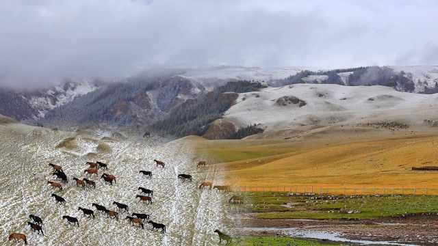 世界最大军马场飞雪连天,骏马踏雪觅食美轮美奂