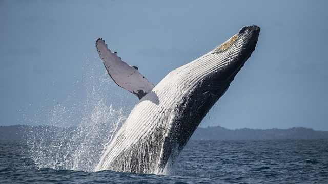世界海洋日,海洋哺乳动物科普