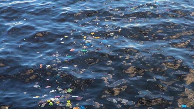 世界海洋日,海洋环境科普