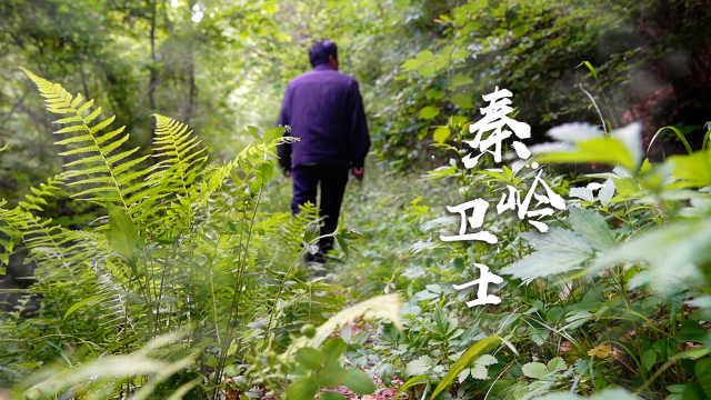 秦岭卫士|54岁护林员守秦岭37年,进山靠吼驱赶野