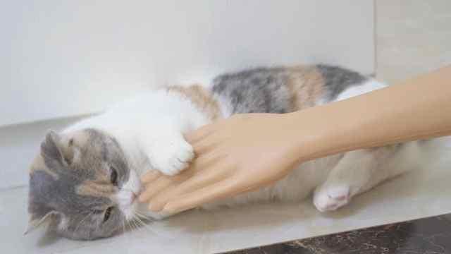 把假人放在猫面前,猫会是什么反应?猫:有两个铲屎的!