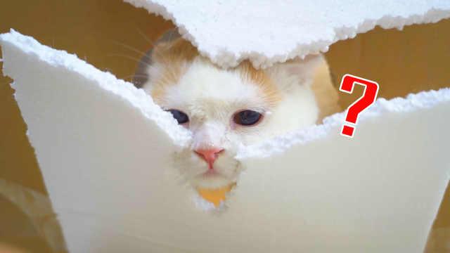老鼠打洞不稀奇,猫咪打洞见过吗?猫:师从老鼠!