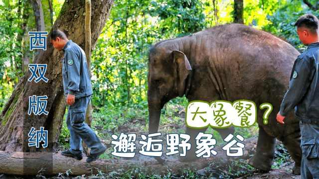 在西双版纳第二天,邂逅野象谷