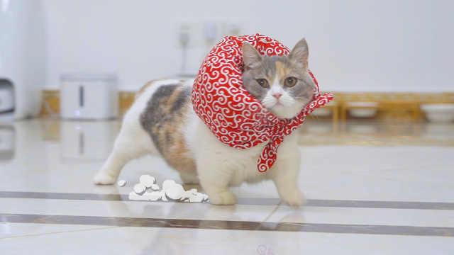 在地上贴透明胶带,猫跑过去会撞到吗?猫:紧急刹车!