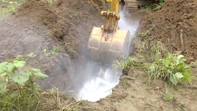 湖北全面禁食野生动物,916只竹鼠被填埋处理