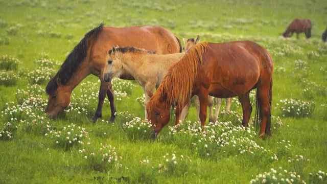 草原是绝佳的打卡地