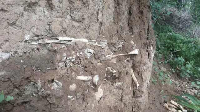 山西高平发现疑似长平之战尸骨坑:厚0.6米长2