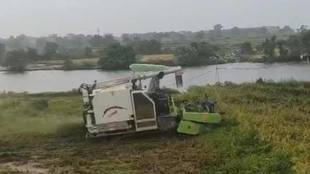 洪灾致鄱阳湖周边农户损失惨重,当地正组织抢收