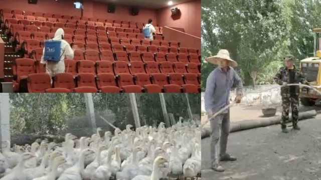 影院复工记丨影院老板带员工养鹅自救半年:看
