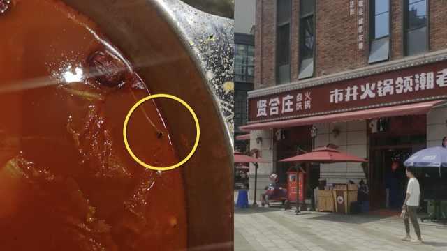 顾客曝火锅汤里舀出虫子,店方:附近有间公厕,按5倍赔偿