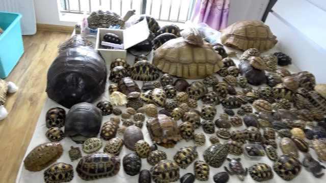 特大非法出售野生动物及其制品案告破,涉案价值超千万