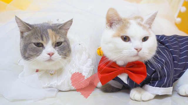 饺子和元宵的婚礼终于来啦!
