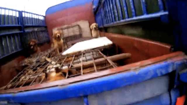 养狗户高速应急道私卖17条狗,全都没检疫,交易称重撞见民警