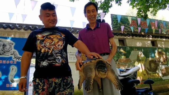 """男子搬家将27斤""""龟儿子""""送给动物园:外来物种"""