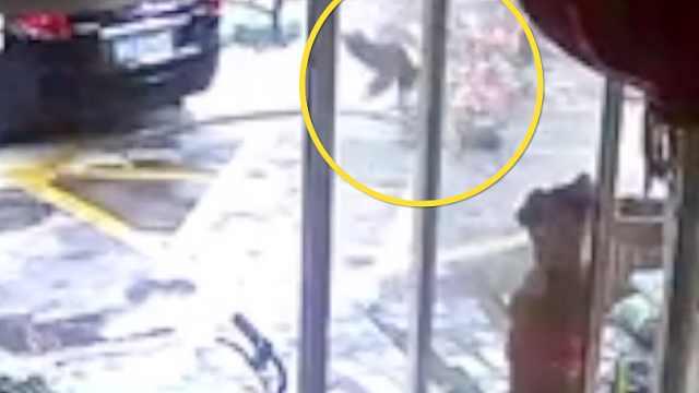 深圳被坠落树枝砸中男童已去世,**得知消息后吐