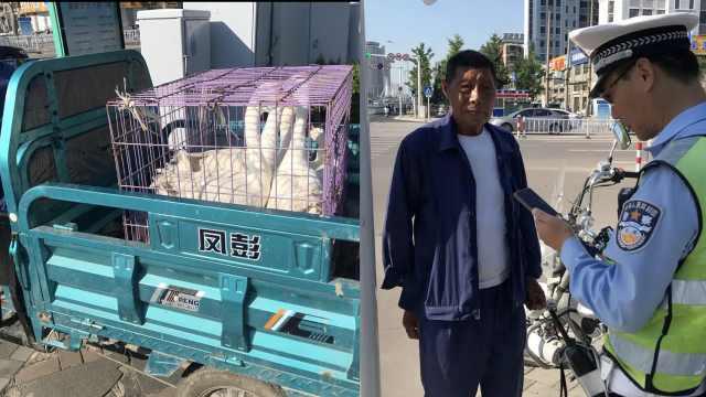 7旬老人凌晨进城卖鹅:没卖掉却违章,交警教育