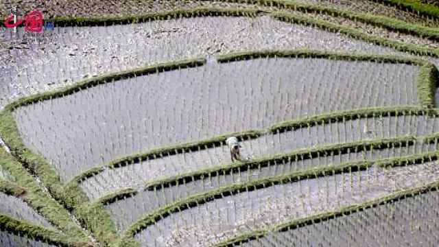 中国古代插秧与育秧技术的发明