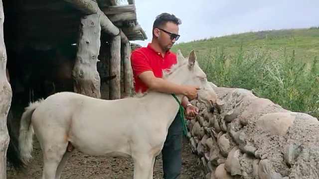 冲海里救人马匹去世,新疆男子赠万元马驹给救人者:亲自去送