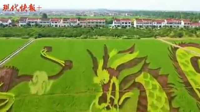 老农场变身网红,张家港常阴沙是怎么做到的?