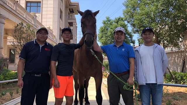"""下海救人英雄马""""将军""""痊愈,当地众筹为去世马匹立雕塑"""