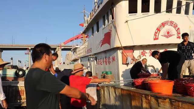 东海梭子蟹遭30年不遇蟹荒:码头人比蟹多,千元难抢一筐