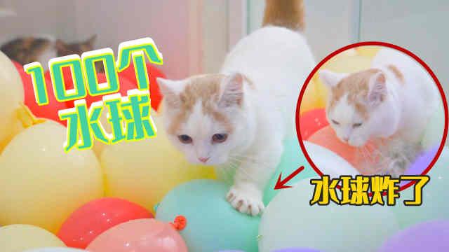100个气球堵住猫咪去路,猫会怎么出来?