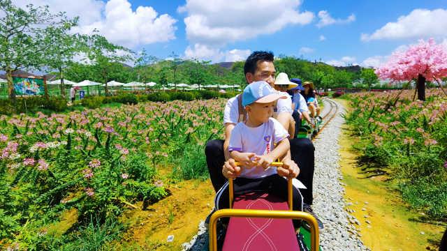 佛山亲子游:带孩子坐小火车穿越花海