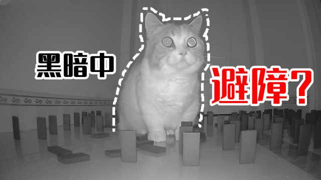 猫的夜视能力有多强?漆黑一片还能精确避障!