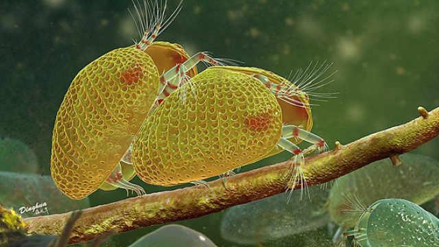 一亿年!世界最古老的精子现身,长度是身体的1/3