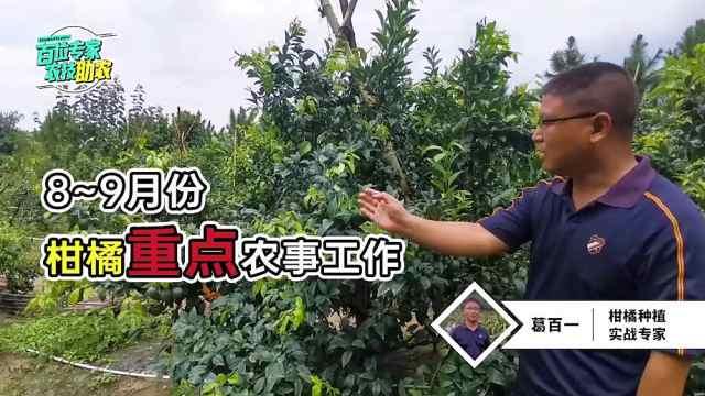 秋季柑橘园该如何管理?资深技术专家总结,每一点都非常重要