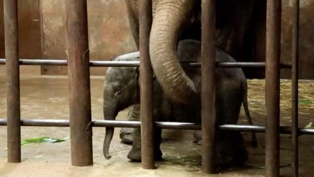 昆明亚洲象