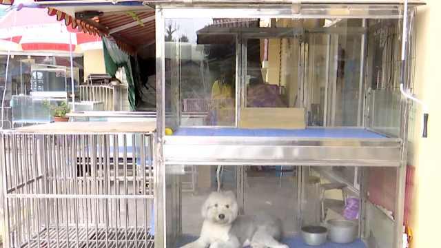 实探昆明宠物寄养市场:往年国庆一笼难求,今年冷清订单减半