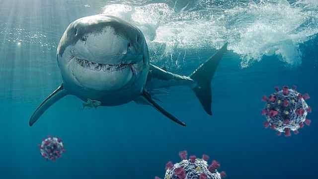 环保组织警告:葛兰素史克新冠疫苗需杀死25万条鲨鱼